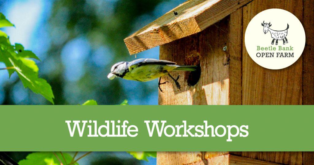 Wildlife Workshop Week